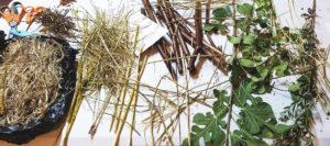 Invasive plant fibers